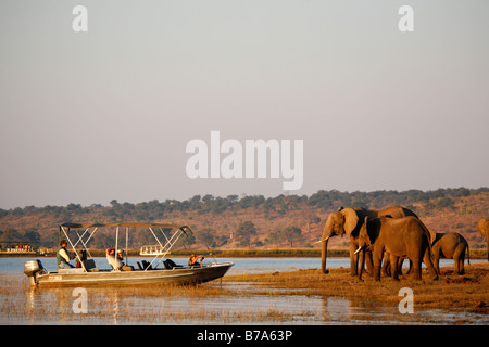 Tourists on a boat safari viewing elephants on the banks of the Chobe River - Stock Photo