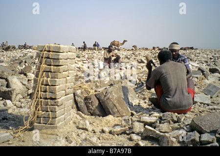 Afar men working in a salt mine on the Danakil depression - Stock Photo