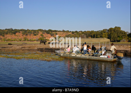 Tourists on a boat safari viewing a herd of buffaloes on an island in the Chobe River - Stock Photo