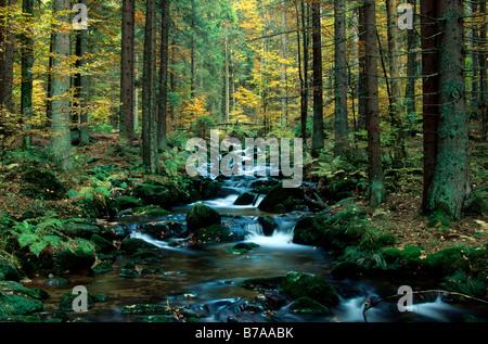 Mountain stream 'Kleine Ohr' in autumn, National Park Bavarian Forest, Bayerischer Wald, Lower Bavaria, Bavaria, - Stock Photo