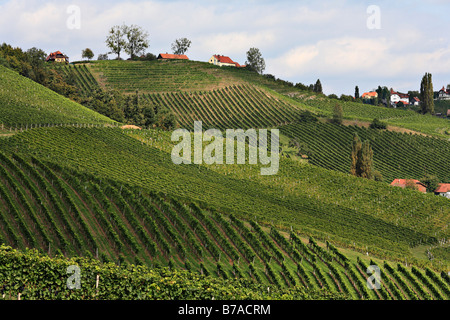 View of vineyards in Slovenia from Ratsch on the Suedsteirische Weinstrasse, Southern Styrian Wine Route, Styria, - Stock Photo