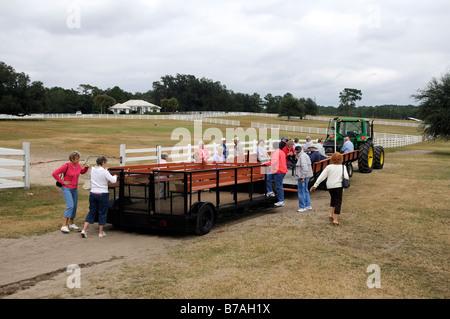 New England Shire Horse Center In Ocala Florida Usa Two