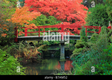 Footbridge across pond surrounded by maples in fall color, at Kubota Japanese Gardens, Seattle, Washington - Stock Photo