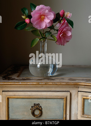Still life of pink camellia flowers in a glass vase, on an antique desk - Stock Photo