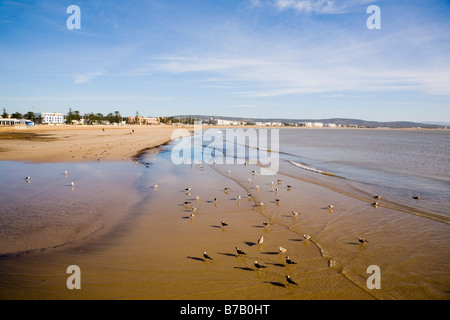 Essaouira Morocco North Africa  View along shoreline of quiet sandy beach in west coast seaside resort - Stock Photo