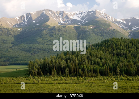 Birch forests and towering mountains at Kanas national park in Xinjiang in China. - Stock Photo