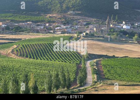 Vineyards during summer season in Monjardin, Navarre - Stock Photo