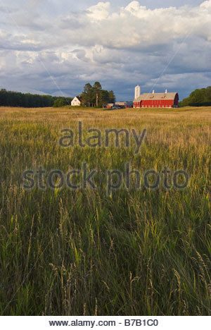 Wheat field with farm in distance - Stock Photo