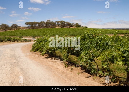 The red earth shows in the access road to Coriole Vineyard, McLaren Vale, one of South Australia's premier wine - Stock Photo