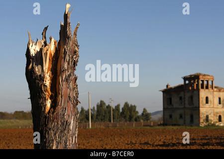 Damaged Pine Tree Trunk and Old Ruin Maremma Tuscany Italy - Stock Photo