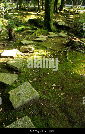 Path of stepping stones under trees