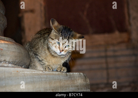 Stray Cat sitting in the Hagia Sophia, Istanbul, Turkey - Stock Photo