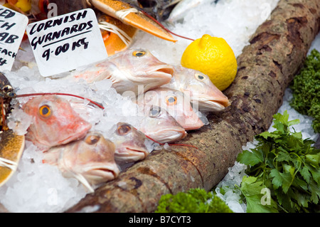 Fresh Cornish Gurnards at Borough Market, London - Stock Photo
