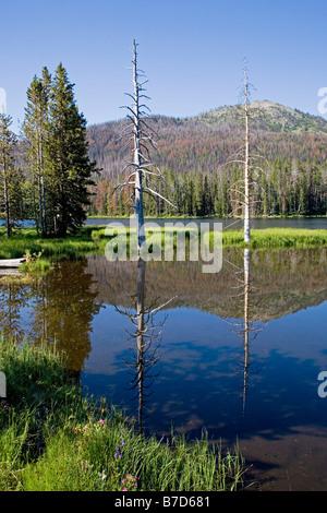 Sylvan lake, Yellowstone National Park, Wyoming, United States of America (USA), North America - Stock Photo