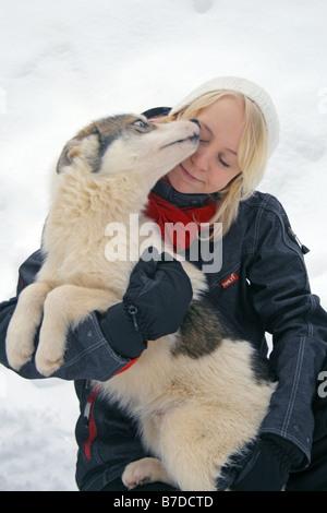 Siberian husky (Canis lupus f. familiaris), Visiting husky farm at Kuusamo safaris, Finland, Kuusamo - Stock Photo