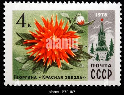 Dahlia, georgina 'Red star', postage stamp, USSR, Russia, 1978 - Stock Photo