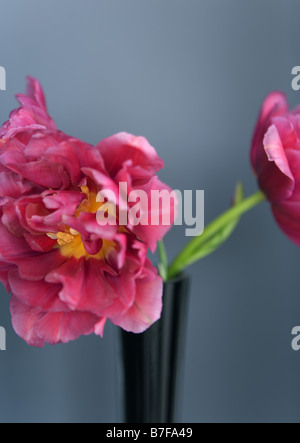 Pink tulips in vase - Stock Photo