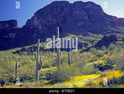 Picacho Peak State Park in Arizona in the USA - Stock Photo