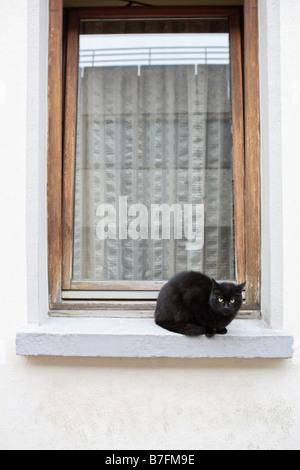 Black cat sitting on white window ledge - Stock Photo