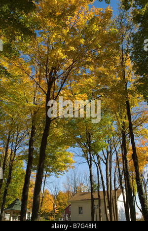 Canopy of trees over Prestons Antque Gaslight Village in Michigan USA. - Stock Photo & Tree canopy turning in Fall glowing in bright yellow overhead ...