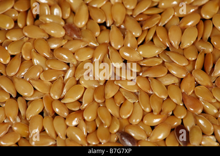 Flax Seeds or Linseed (Linum usitatissimum) - Stock Photo
