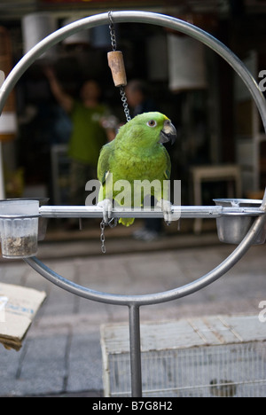 Parrot in Mongkok bird market, Kowloon, Hong Kong - Stock Photo