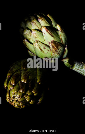 Two raw artichokes against black background - Stock Photo