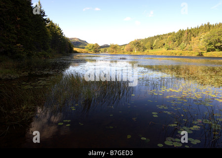 pond on mount desert island maine usa - Stock Photo