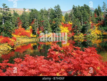 Autumn leaves at Midori-numa - Stock Photo