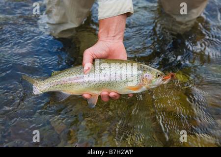 Fisherman holding fish near stream - Stock Photo