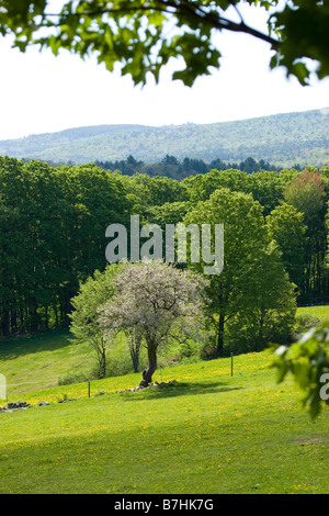 Rural summer scene of fields, trees and hills - Stock Photo