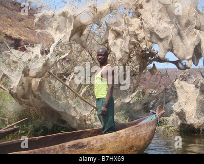 Luvua river fisherman in dugout canoe near tree covered with spiders webs Katanga province Democratic Republic of - Stock Photo