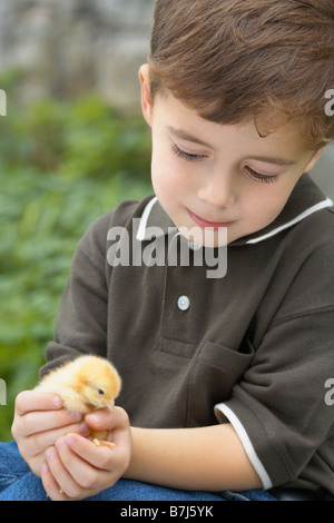 Little boy holding a baby chick on a farm, Waterford, Ontario - Stock Photo
