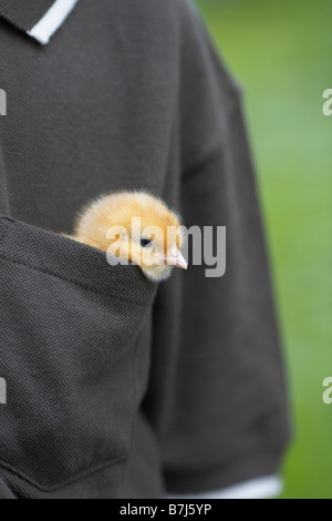 Little boy with a baby chick in his pocket, Waterford, Ontario - Stock Photo