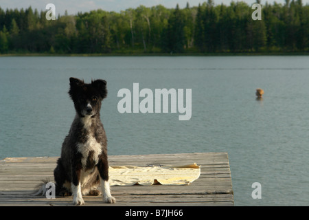 Dog at Katherine Lake, Canada, Manitoba, Riding Mountain National Park.  Motor boats are not allowed on Katherine - Stock Photo