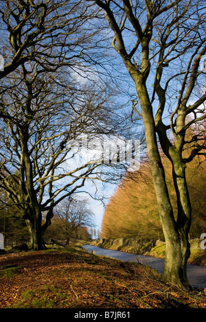 View looking up the The Street a road in the Goyt Valley in the Peak District in Derbyshire - Stock Photo
