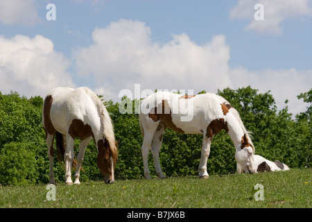 Horses grazing on green grass of ranch land beside a ...