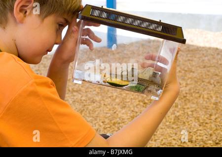eight year old boy holding plastic cage with captured lizard, southwestern united states - Stock Photo