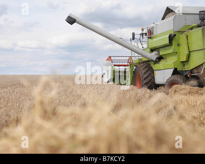 Combine Harvester In Wheat Field - Stock Photo