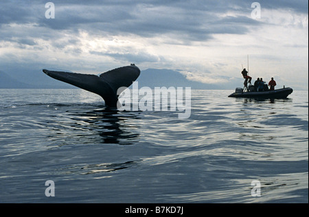 Humpback Whale sounding, watched by researchers, Alaska - Stock Photo