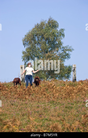 Lady walking dogs in New Forest Hampshire England - Stock Photo