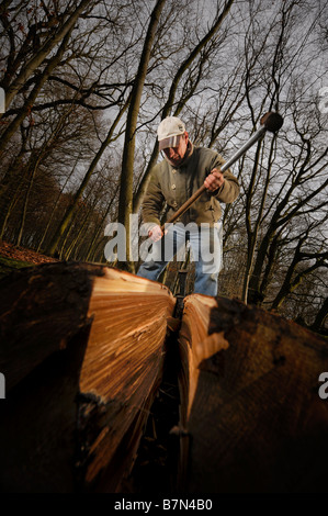 The splitting of sweet chestnut logs being used to make a Sussex Cleft fence in the traditional way. Picture by - Stock Photo