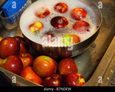 Freshly picked apples in a stainless steel bowl and kitchen sink being washed and prepared for eating or cooking. - Stock Photo