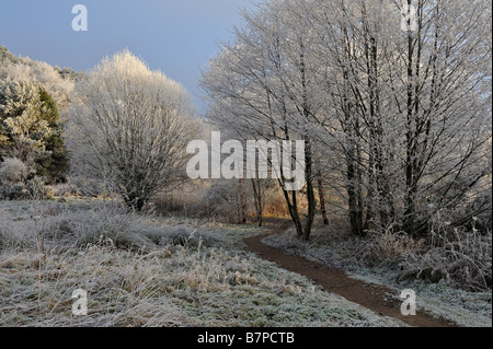 Heavily frosted trees after days of freezing fog at Inverness Scottish Highlands UK - Stock Photo