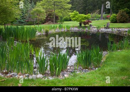 Vashon Island WA Pacific northwest garden pond with yellow flag iris ...