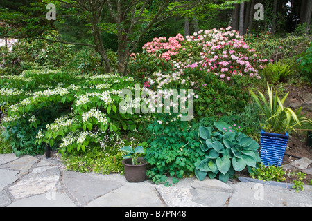 Vashon Island WA: Stone path borders a Pacific Northwest forest garden featuring flowering viburnum and rhododendrons - Stock Photo