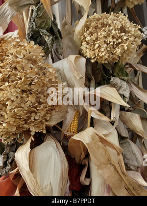 Fall arrangement of dried hydrangea flowers and dried corn stalks. - Stock Photo