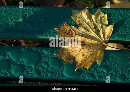 Autumn leaf on rain-splashed park bench - Stock Photo