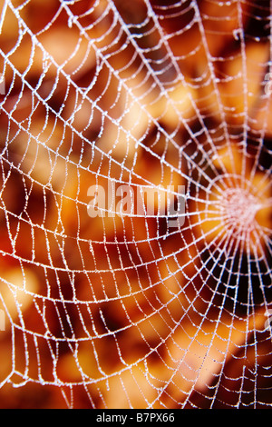 Spiders web with dew against autumn leaves - Stock Photo
