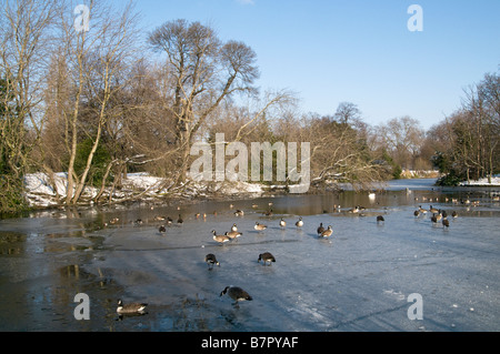 UK.Swans and ducks on lake covered in snow and ice in Victoria Park, London Photo Julio Etchart - Stock Photo